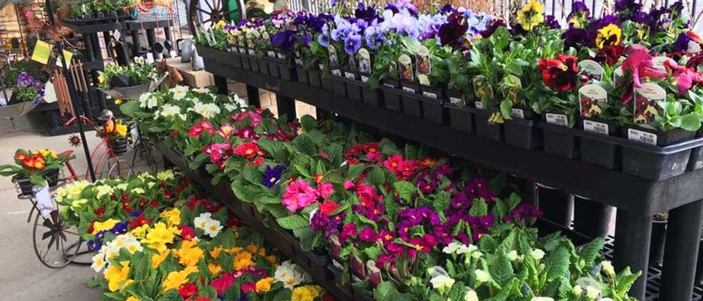 Outdoor Garden & Plants